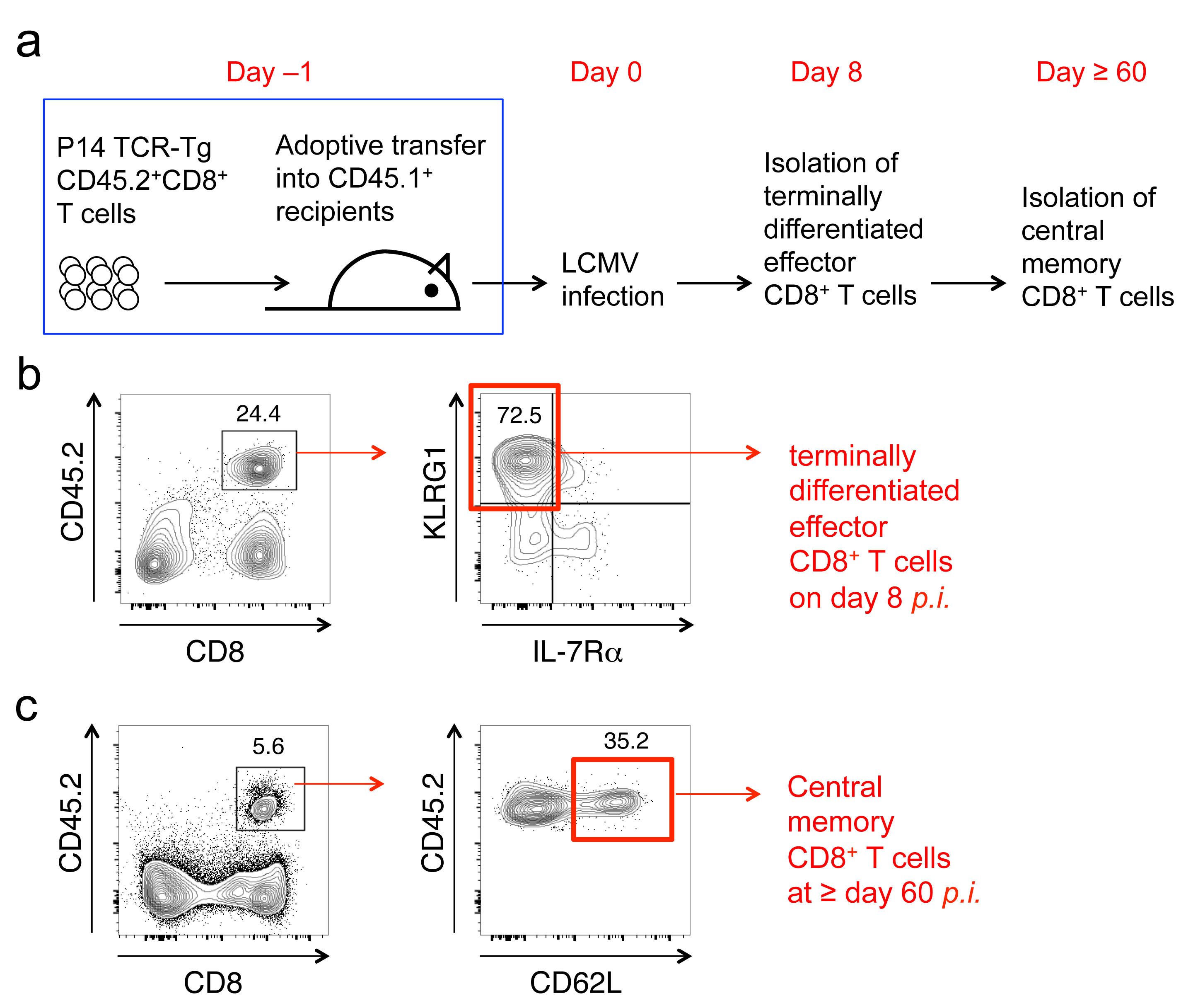 Cd8t trns these multi dimensional datasets provide a blueprint for delineating molecular mechanisms underlying functional differentiation of cd8 t cells malvernweather Gallery